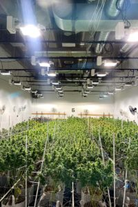 GreenRiNo Craft Cannabis