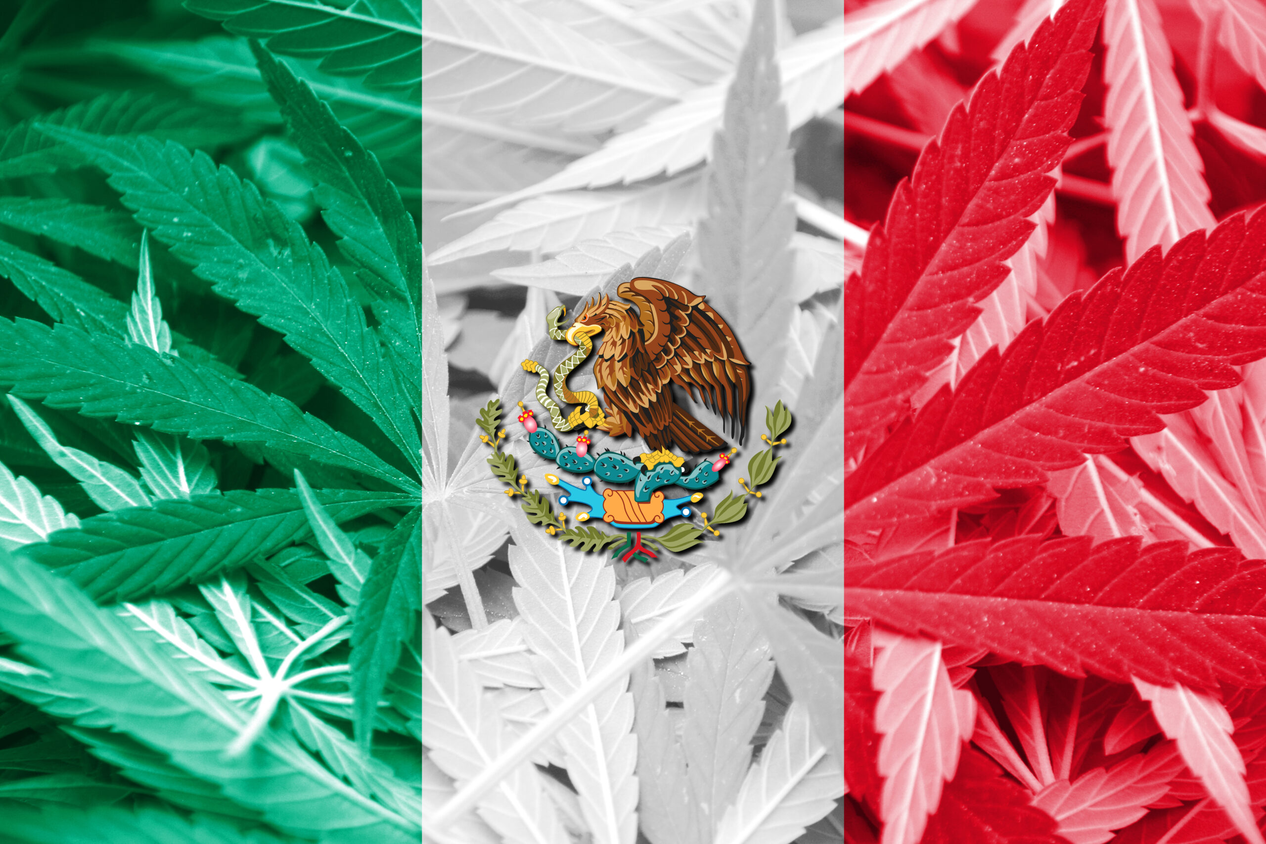 Legal cannabis in Mexico