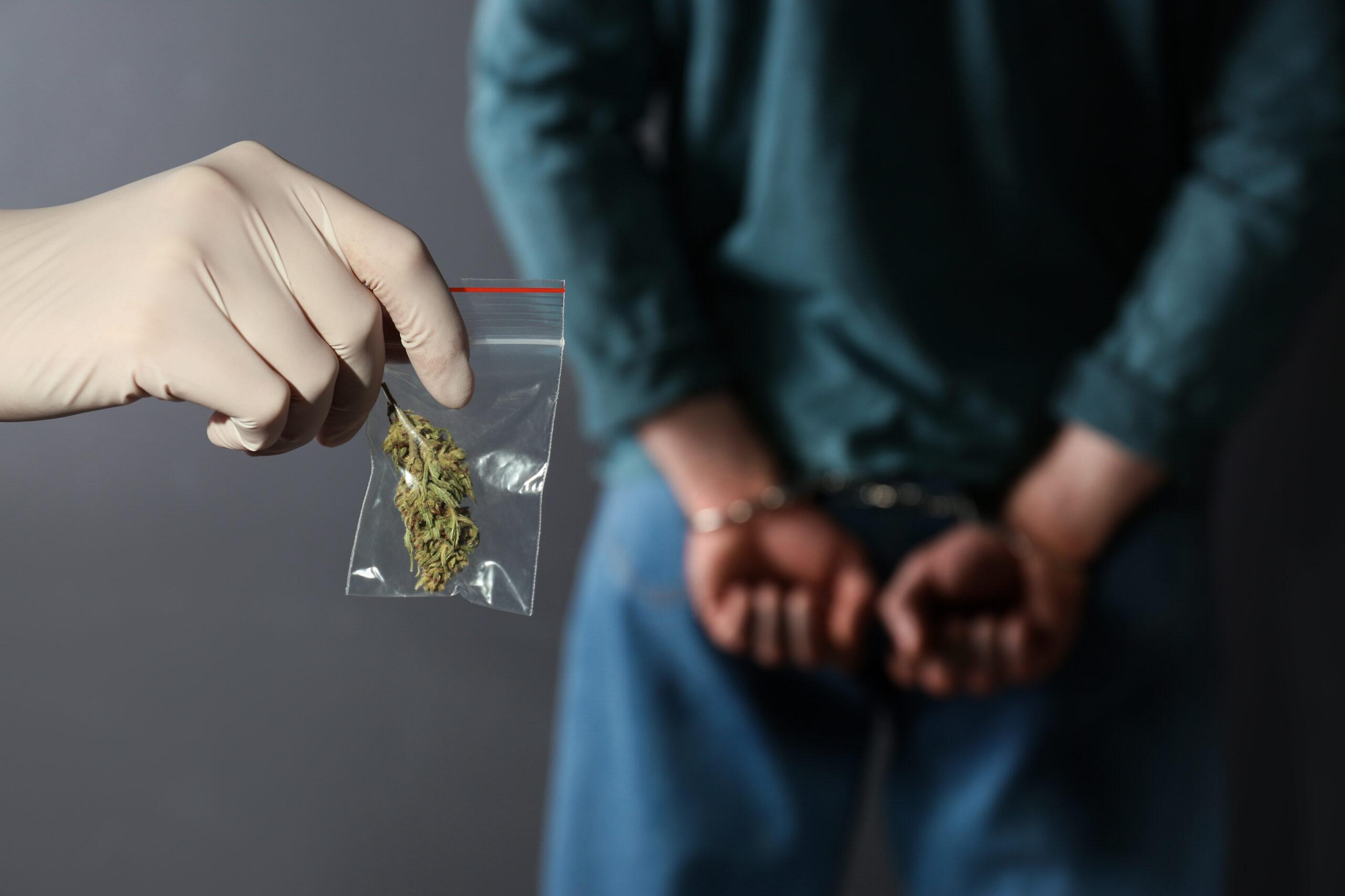 Police worker holding hemp in plastic bag near arrested drug dealer on color background